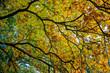widok na jesienne kolorowe liście pod słońce