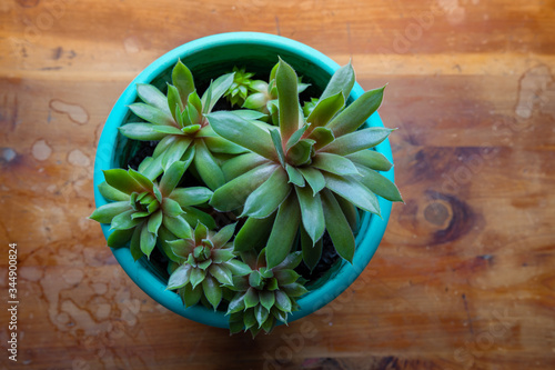 Valokuvatapetti Small pot of succulents seen from overhead, rick wood background creative copy s