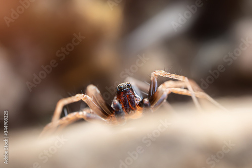 Photo Spider close-up, macro photo. Arthropods, insects.