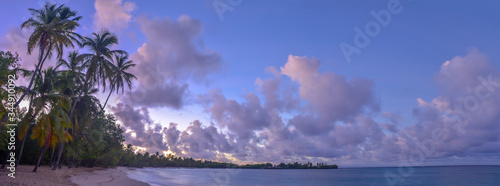 Exotic Antilles beach with palm tree on the Martinique Tropical beach at sunrise Wallpaper Mural