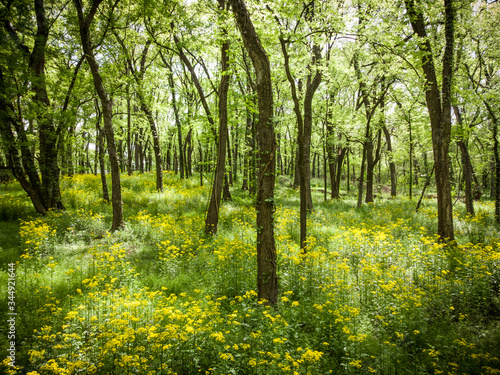 Wildflowers in the beautiful spring forest