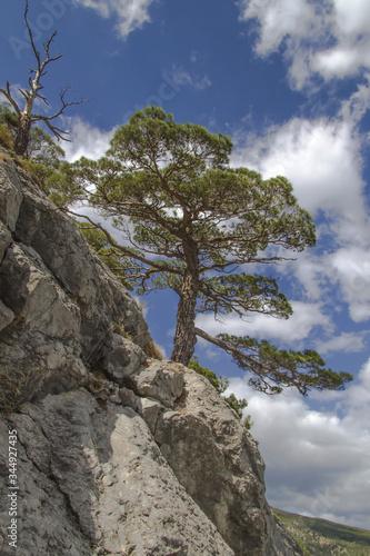 Obraz Krym, Morze Czarne, Nowy Świat, rezerwat przyrody, drzewo, sosna, niebo, chmury, skały. - fototapety do salonu