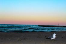 Seagull On The Rainbow Beach