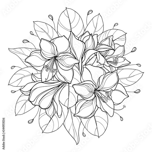 Round bouquet of outline bulbous Amaryllis or belladonna Lily flower bunch and leaf in black isolated on white background Wallpaper Mural