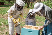 Family Checking On Their Beehive