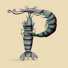 Shrimp - P