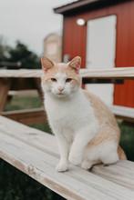 A Barn Cat