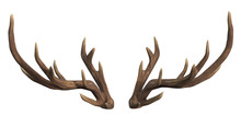 Deer Antlers Isolated On White...