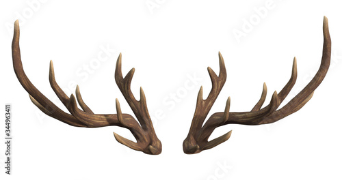 Fényképezés Deer antlers isolated on white 3d rendering