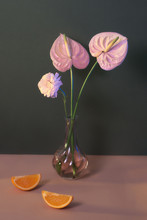 Still Life With Pink Flower In...