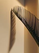 Leaf And Shadow