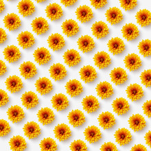 Floral Pattern With Natural Orange Flowers On A Light Background.