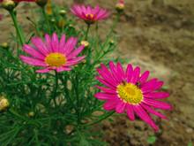 Moscas Sobre Flores Con Pétalos Grandes