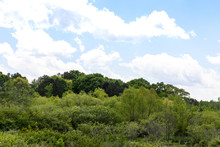 Hillside With A Wide Variety Of Green Trees, Blue Sky With Clouds Beyond, Horizontal Aspect