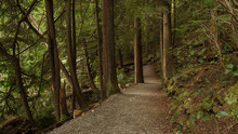 Forest Loop Trail Through Tall Trees At Sasamat Lake, Belcarra Regional Park, BC