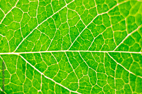 Photo abstract green natural background, macro image of tree leaves, magnification and