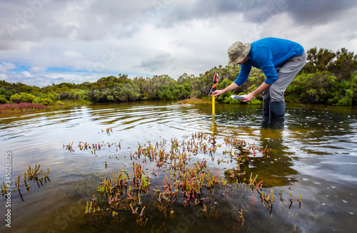 Fotomural Scientist measuring water depth to install water level data loggers in a coastal wetland  to understand inundation period and impact on ecosystem services