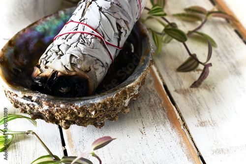 Photo A close up image of a white sage bundle in an abalone shell with green plant