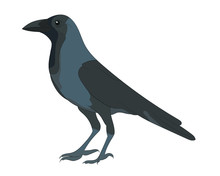 Vector Illustration Of Crow On White Background