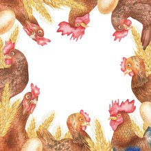 Square Frame Of Hens And Cock