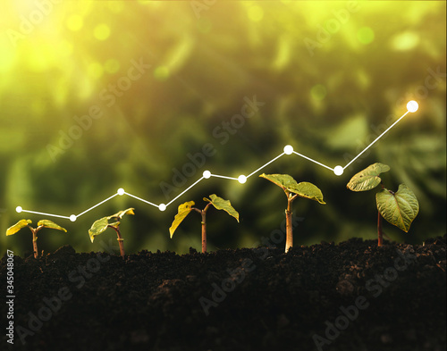 Seedling are growing from the rich soil. Concept of business growth, profit, development and success.