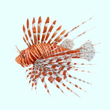 Beautiful Vector Stock Illustration With Watercolor Hand Drawn Lion Fish.