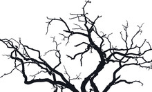 Tree Branches Silhouette In Na...