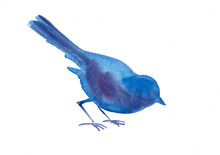 Blue  Watercolor Bird Eating Artistic Drawing Isolated On White Background