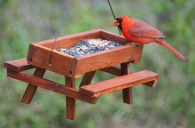 A Red Male Cardinal Eating See...