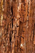 Rotbraunes Fein Strukturiertes Holz Mit Bröckeligem Muster Und Pilzablagerungen
