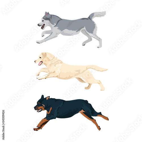 Photo Running dogs vector set