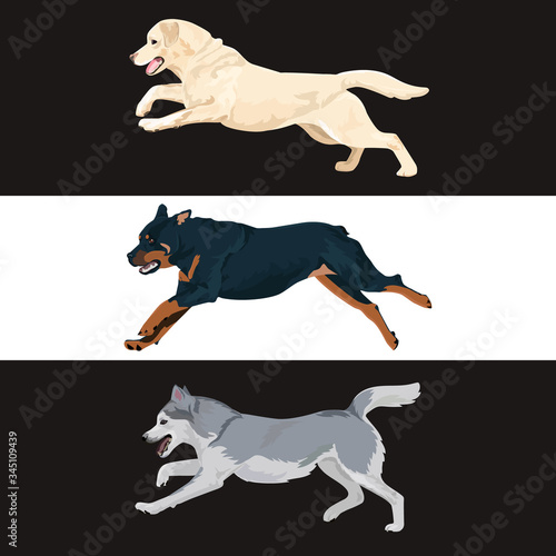 Photo Running dogs vector set
