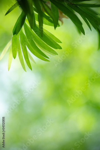 Fototapety, obrazy: Beautiful nature view of green leaf on blurred greenery background in garden with copy space using as summer background natural green leaves plant landscape, ecology, fresh wallpaper concept.
