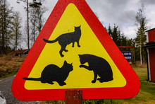 Norrkoping, Sweden Cat Crossing Sign On A Country Road.