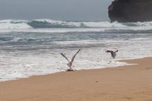 Zwei Möwen Am Strand Die Im W...