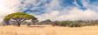 African landscape in the Hwange National Park, Zimbabwe
