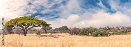 Fotografie, Obraz African landscape in the Hwange National Park, Zimbabwe