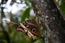 Butterfly On A Tree In Costa Rica
