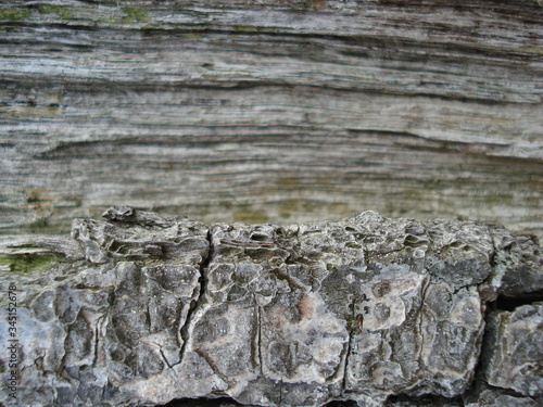 Photo Altes Holz