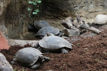 Turtles From The Barcelona Zoo. Catalonia. Spain