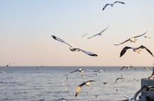 Group Of Seagulls At Bang Pu R...