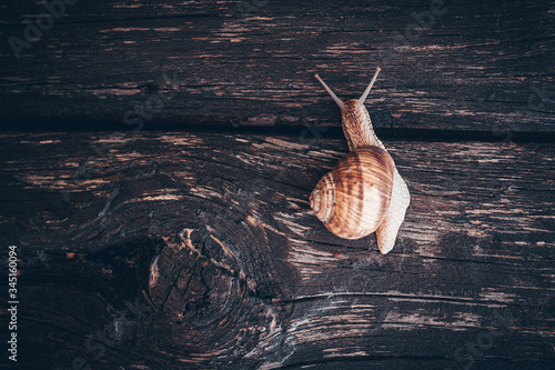 Photo the snail on a branch