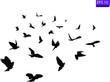 Flock of flying birds. Transparent background. silhouette of flying birds. Black vector flying birds flock silhouette. EPS 10
