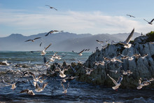 Flock Of Seagulls By Mountains