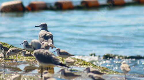 aves del caribe Canvas Print