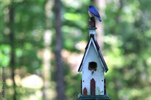 Bluebird sitting on top of Birdhouse Fototapet