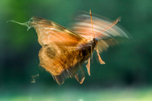 Blurred Butterfly Photo During...