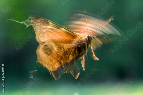 blurred butterfly photo during flight