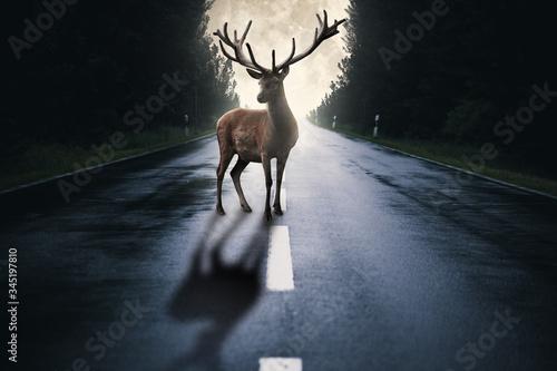 Tablou Canvas Hirsch steht auf einer Straße im Wald mit Mond im Hintergrund