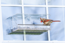 Red Northern Cardinal Bird Perched On Bird Feeder On Window